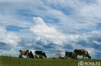 Сельский туризм: Доход фермеров, развитие инфраструктуры, рабочие места