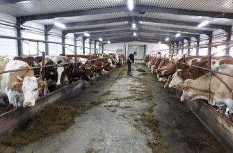 Россельхознадзор Якутии выявил нарушения при производстве молочной продукции