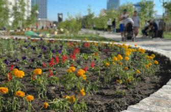 Зеленые насаждения на улицах Якутска впервые получат паспорта