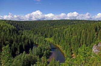 Рослесхоз направил Якутии почти 150 млн рублей на борьбу с сибирским шелкопрядом