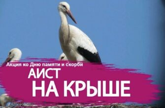"""Якутяне присоединятся к всероссийской акции """"Аист на крыше"""" ко Дню памяти и скорби"""