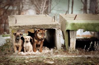 Проект о штрафах за брошенных животных могут внести в Госдуму до конца весенней сессии
