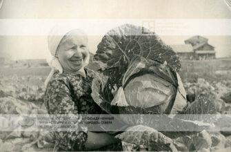 """Рубрика """"Кадр"""": Якутская капуста, завоевавшая золотую медаль первой ВСХВ"""