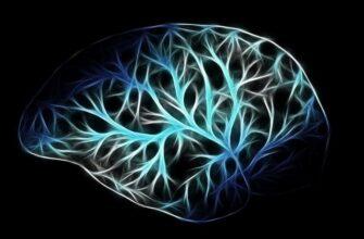Ученый заявил о снижении уровня человеческого интеллекта