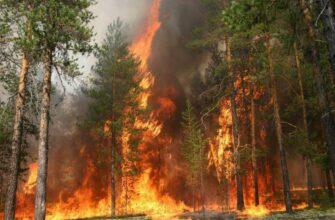 Главам районов Якутии поручили оперативно принимать решения по тушению лесных пожаров