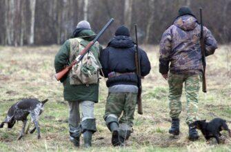 В лесах «зелёных зон» разрешили охоту