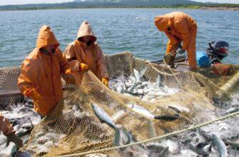 Правительство утвердило дополнительные меры господдержки рыбного промысла