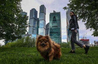 Нетрезвым россиянам запретят выгуливать животных