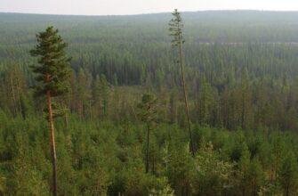 В Верхнеколымском и Усть-Майском районах может установиться высокий класс пожароопасности