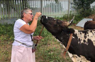 """""""Молоко имеет необычный вкус"""". Москвичка рассказала, как содержит коров якутской породы"""