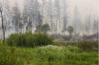 Лесной пожар около села Магарас Горного улуса Якутии локализован