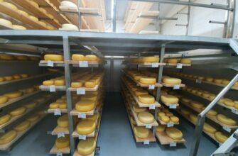 Почти созрел. Якутская компания «Батамайское» выпустит первую партию полутвердого сыра