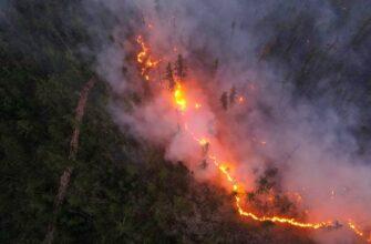 Пожары в Якутии, Карелии, Сибири этим летом стали главными новостями