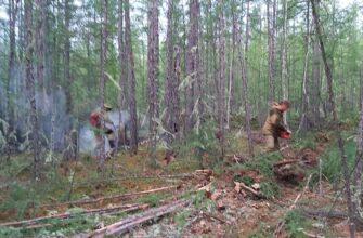 Сергей Сивцев рассказал о ситуации с лесными пожарами в Горном районе Якутии