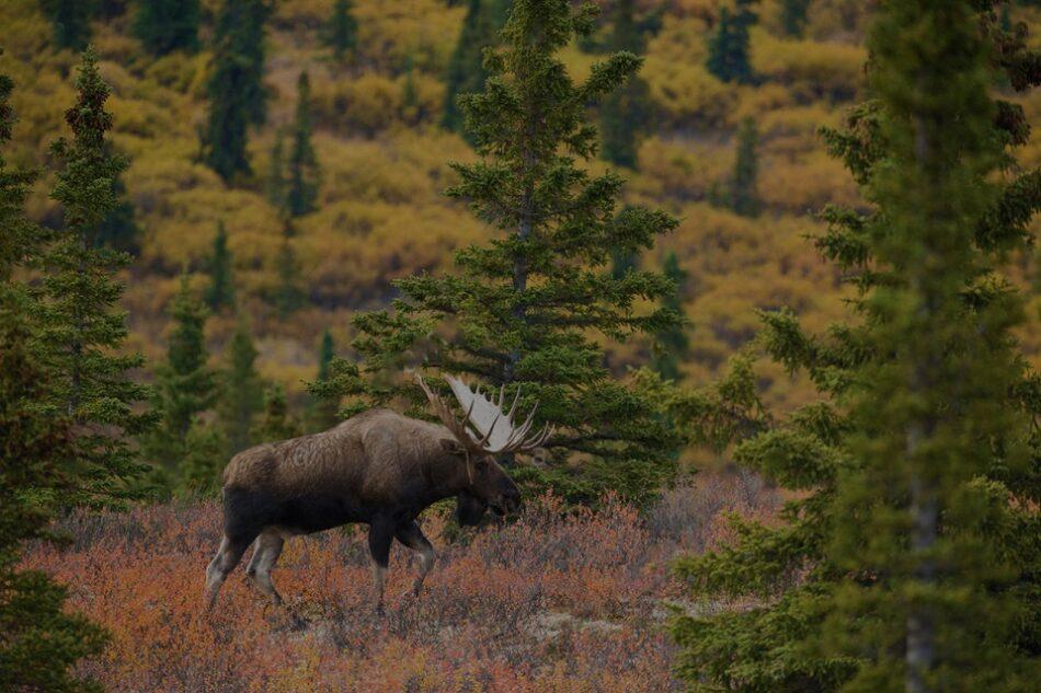 В первый день августа пройдет жеребьевка по распределению разрешений на охоту в Якутии