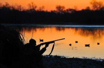 В России для получения охотничьего билета могут ввести экзамен на охотничий минимум
