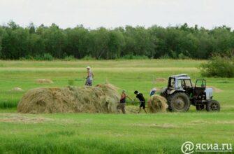 Правительство Якутии примет меры по поддержке аграриев, пострадавших от засухи
