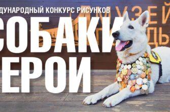 Жителей Якутии приглашают к участию в конкурсе о фронтовых собаках