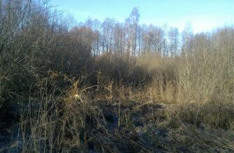 В Якутии юрлицо привлекли к ответственности за неиспользование сельхозугодий