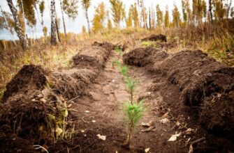 В Якутии продолжают работы по восстановлению леса