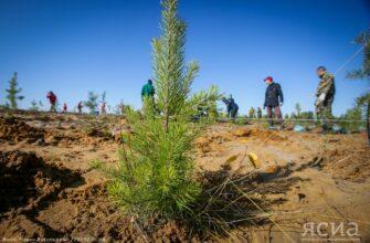 """Для НОЦ """"Север"""" вопрос восстановления лесов станет ключевой задачей"""