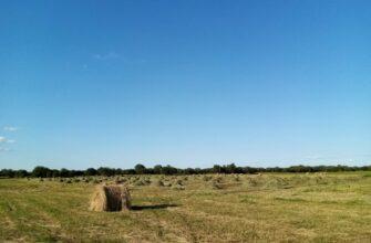 Свыше 14 тысяч тонн кормов заготовлено в Хангаласском улусе Якутии