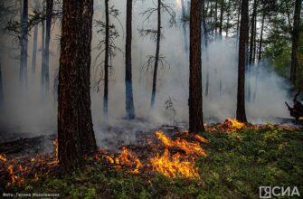 В Якутии за сутки ликвидировали десять лесных пожаров
