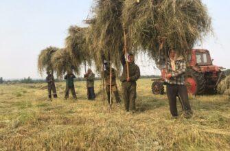 В Хангаласском улусе Якутии лидер сенокосной кампании - кооператив «Хачыкаат»