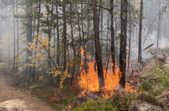 Руководитель ГБУ «Авиалесоохрана»: Пожароопасный сезон в Якутии удлинился на месяц