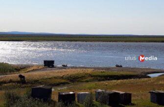 На территорию поселка Чокурдах Якутии забрел овцебык