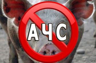 Управление Россельхознадзора Якутии предупреждает об угрозе заноса вируса африканской чумы свиней