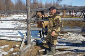 В Момском районе Якутии выводят новую породу лошадей