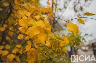 Завтра в Якутске синоптики обещают погоду без осадков