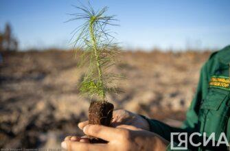 Сохраним лес. В Горном районе Якутии на месте сгоревшего леса высадили сеянцы сосны