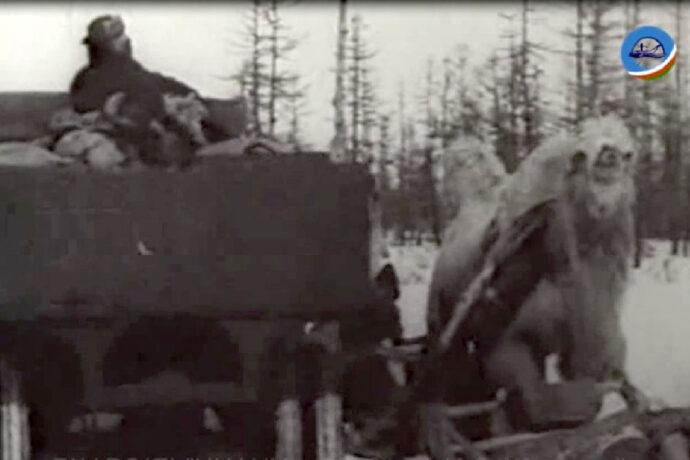 Кинохроника Якутии: Дорога в тайгу. 1931 год