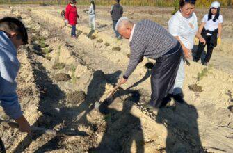 Сотрудники Россельхознадзора Якутии посадили саженцы сосны
