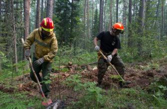 В 32 регионах России, в том числе в регионах ДФО, ликвидирован 241 лесной пожар
