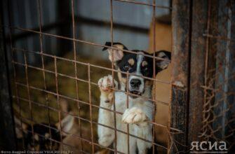 С дачи - на улицу. В Якутии зафиксирован сезонный рост обращений по безнадзорным собакам