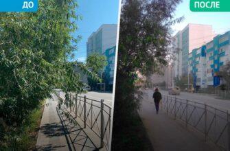В Якутске по просьбе горожан обрезали мешающие ветки деревьев