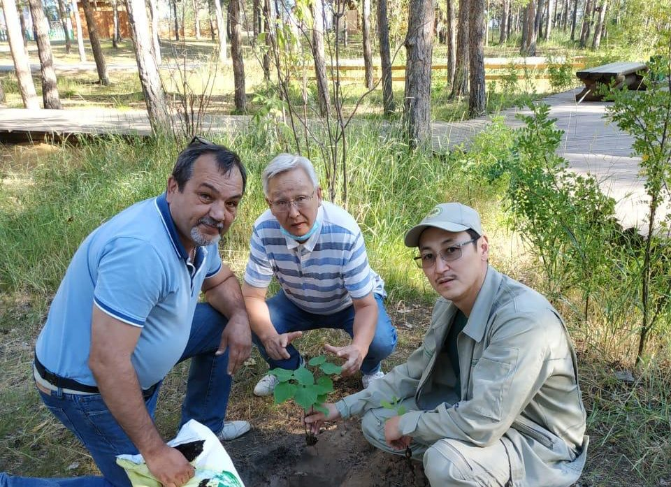 В сквере Лесника в Якутске посадили саженцы, привезенные из Иркутска