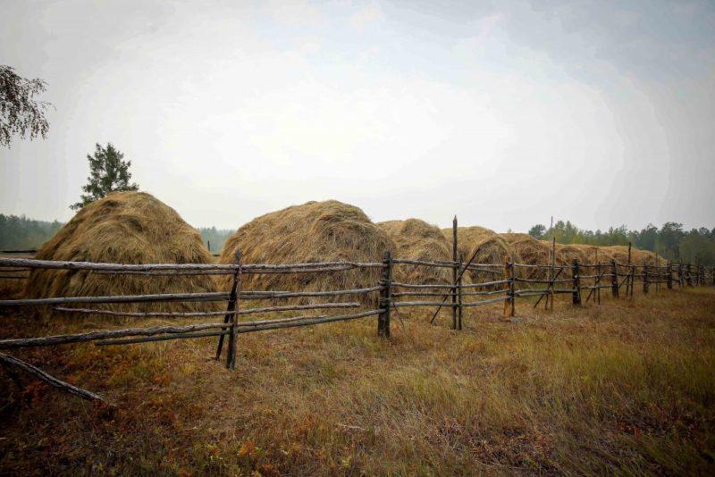 В Чурапчинском улусе используют нестандартные подходы при кормозаготовке