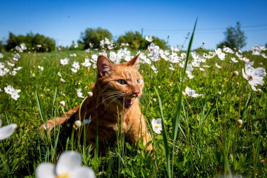 Кота придет время: маркировать животных за свой счет россиян обяжут с 2021-го