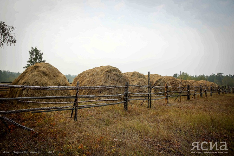 Кормозаготовка и поддержка сельхозтоваропроизводителей – в центре внимания главы Якутии
