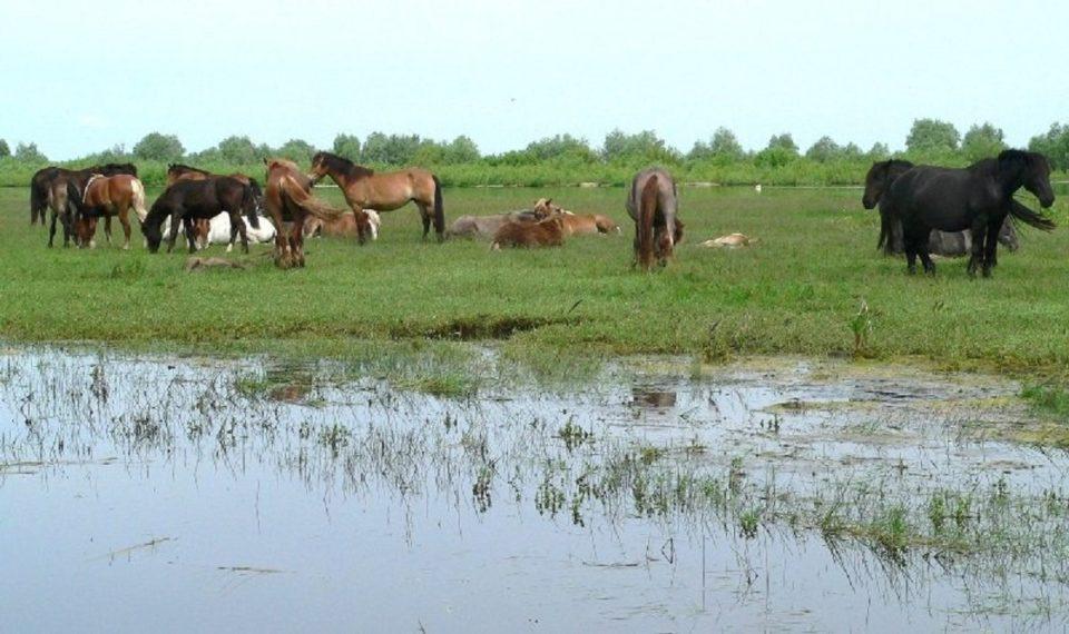 Дождевой паводок на Лене грозит затопить сенокосные угодья в ряде районов республики и Якутске