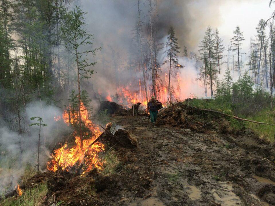 Айсен Николаев: Пожары заставили задуматься не только об охране лесов, но и о их восстановлении