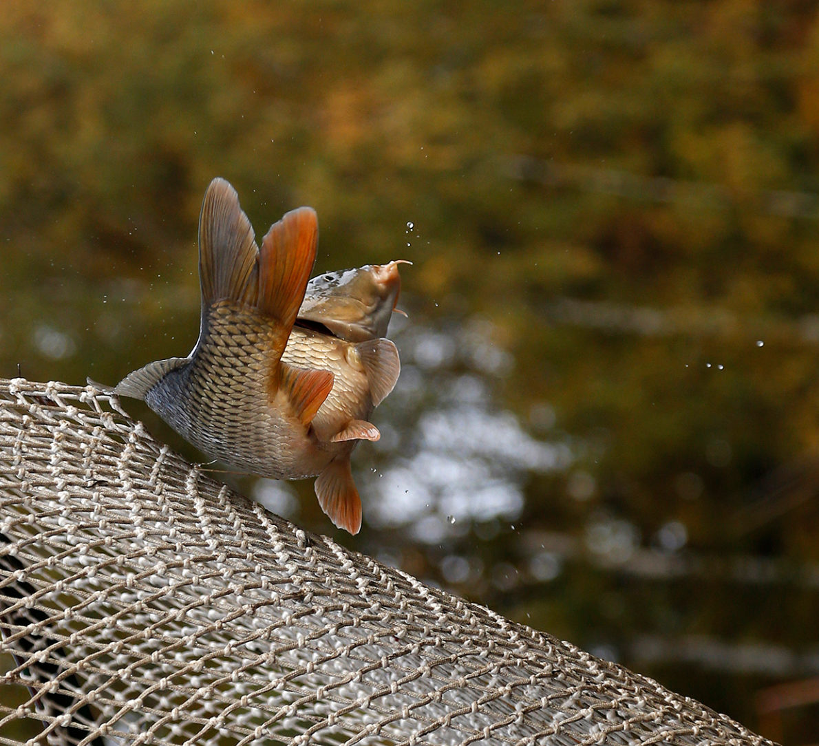 В Якутии разрешили рыбачить сетями на речных и озерных участках